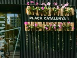 Imagen flowers week 1