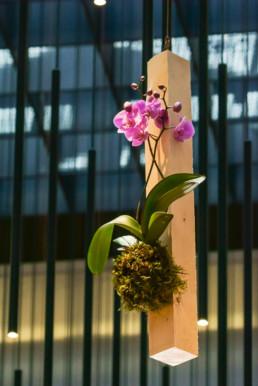 Imagen flowers week 5